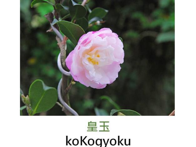 皇玉koKogyoku.JPG