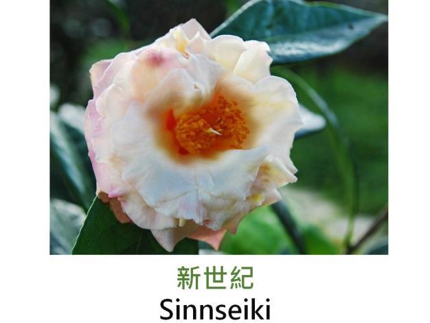 新世紀Sinnseiki.JPG