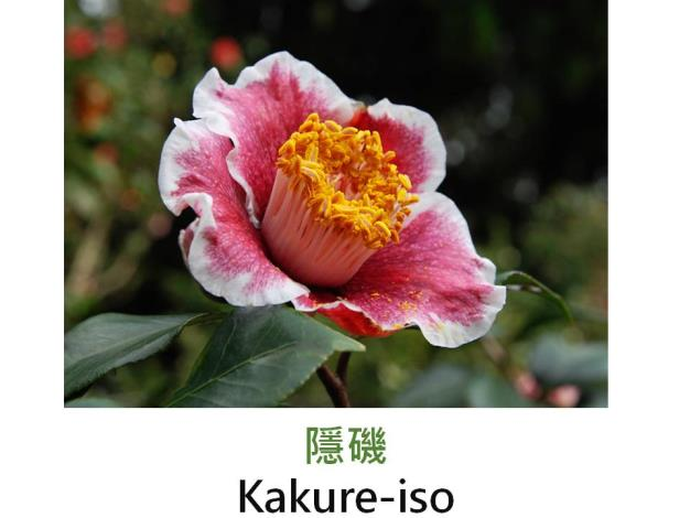 隱磯Kakure-iso.JPG