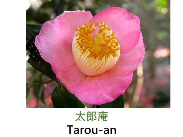 太郎庵Tarou-an.JPG