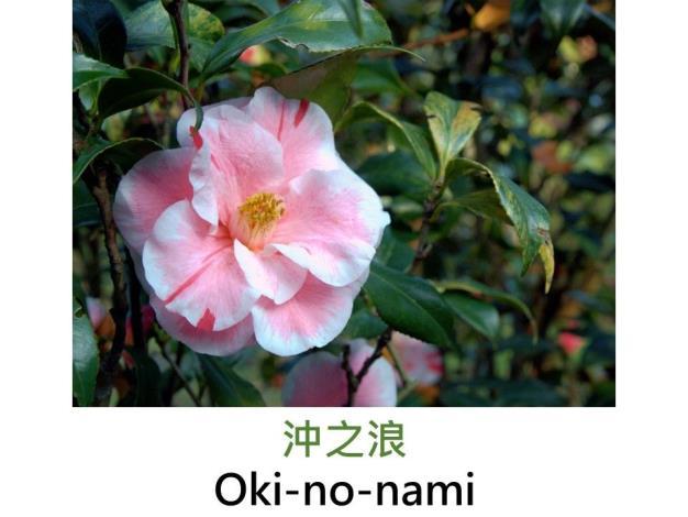 沖之浪Oki-no-nami.JPG