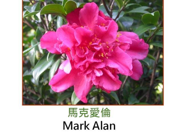 馬克愛倫Mark Alan.JPG