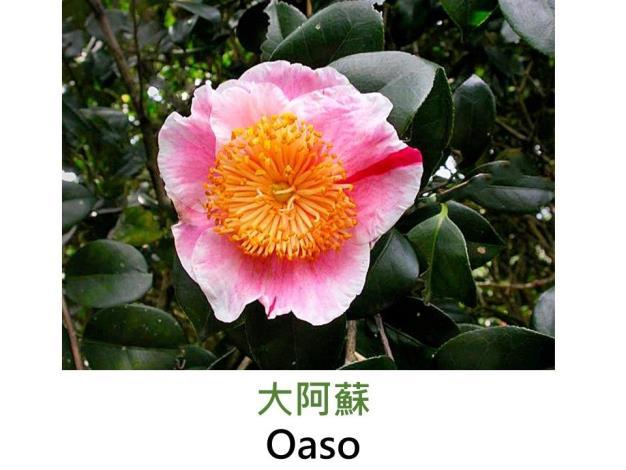 大阿蘇Oaso