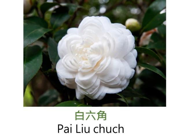 白六角 Pai Liu chuch.JPG