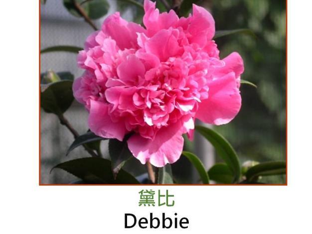 黛比Debbie.JPG