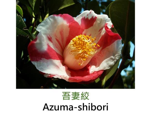 吾妻絞Azuma-shibori.JPG