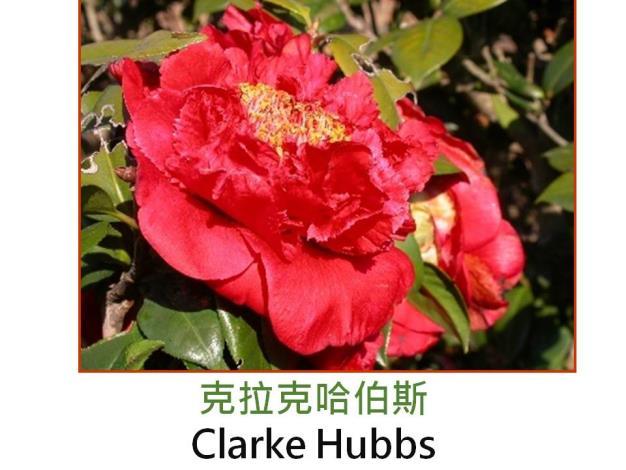 克拉克哈伯斯Clarke Hubbs.JPG