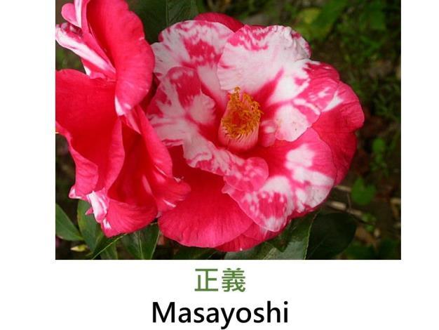 正義Masayoshi.JPG