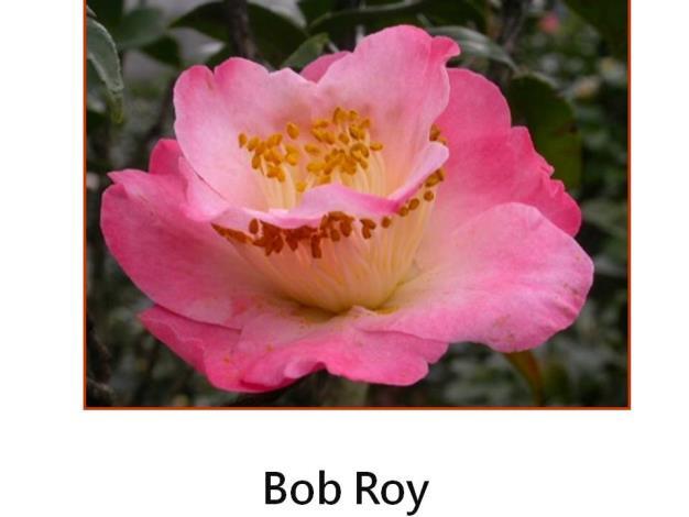 Bob Roy.JPG
