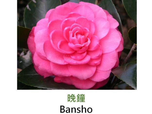 晚鐘Bansho.JPG