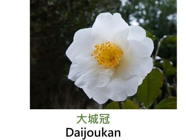 大城冠Daijoukan .JPG