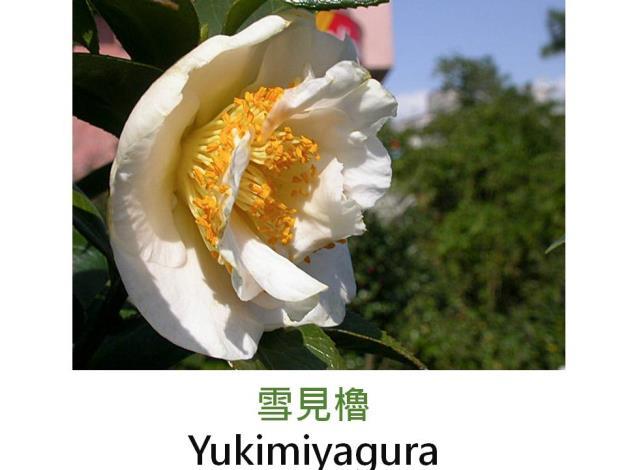 雪見櫓Yukimiyagura.JPG
