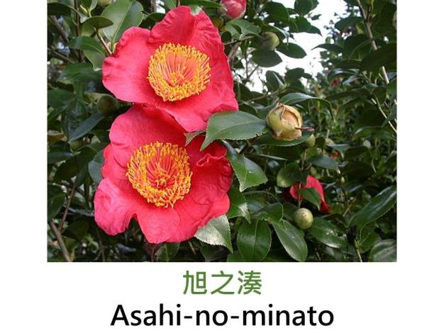 旭之湊Asahi-no-minato.JPG