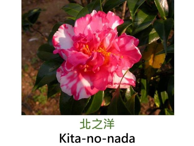 北之洋Kita-no-nada.JPG