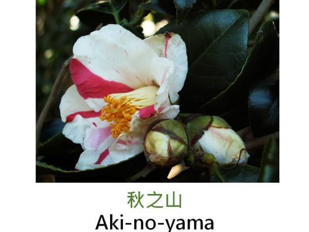 秋之山Aki-no-yama.JPG