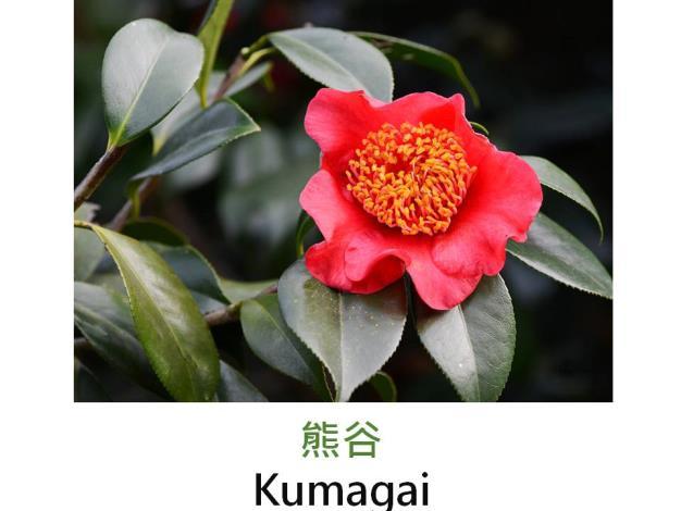 熊谷Kumagai.JPG
