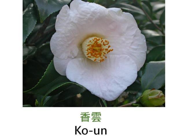 香雲Ko-un.JPG