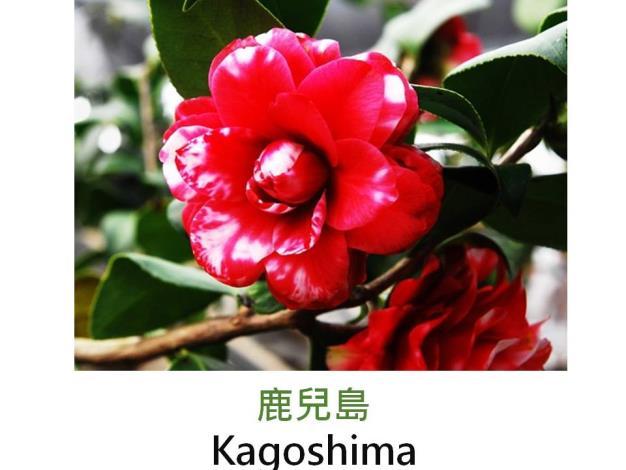 鹿兒島Kagoshima.JPG