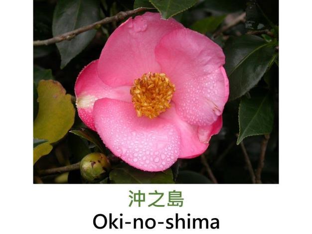 沖之島Oki-no-shima.JPG