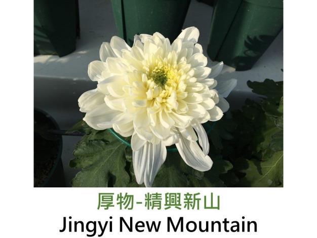 厚物-精興新山.JPG