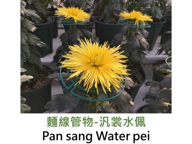 麵線管物-汎裳水佩.JPG