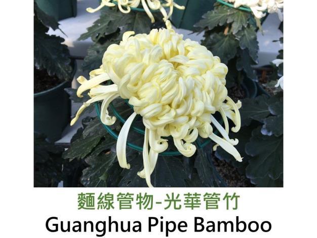 麵線管物-光華管竹.JPG