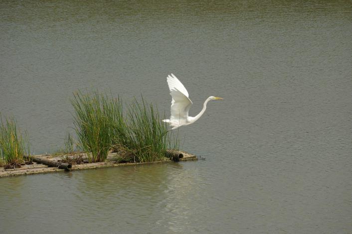 實地認識濕地的動植物