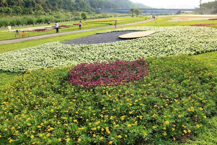 道南河濱公園花海盛開 花期到4月下旬