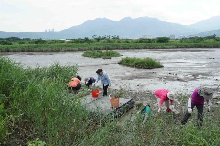 服務團隊也會不定期的進行棲地維護整理的工作