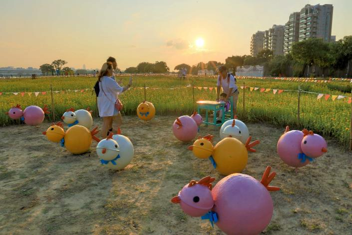 美堤河濱花海即日起至11月上旬是最佳觀賞期