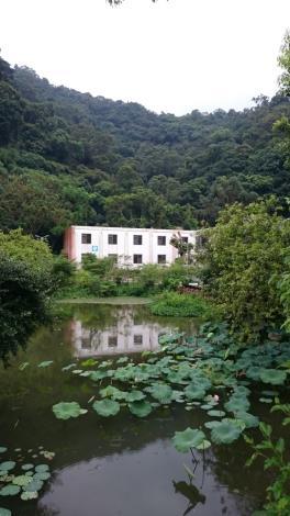 頂埤生態池內的台灣萍蓬草、荷花現在正是開花期,鮮黃小花與粉紅花瓣點綴水面,映襯著後山綠意,彷如一幅美麗的山水畫[開啟新連結]