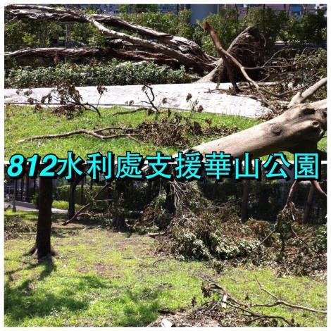 8月12日華山公園清理前樹倒