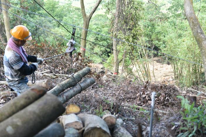良好的經營及撫育是重要的森林管理策略。[開啟新連結]