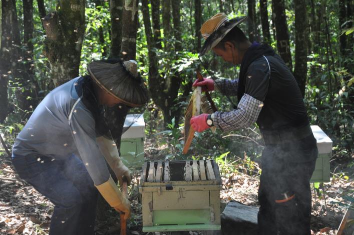 6林下養蜂可以獲得多樣的樹木花蜜(攝影/許原瑞).JPG