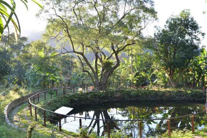 水土保持茶園-生態池