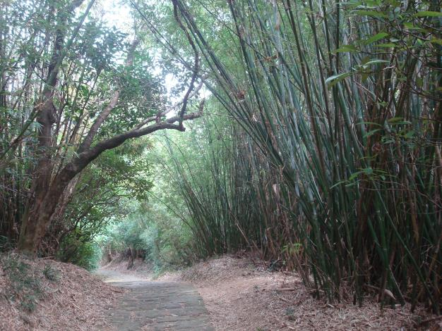 04沿途有大片的竹林形成綠色隧道.JPG