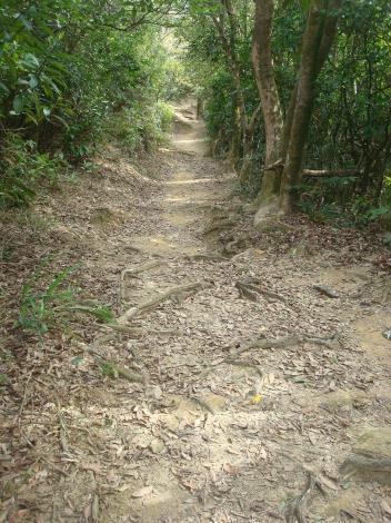 07饒富自然野趣的土石路徑.JPG