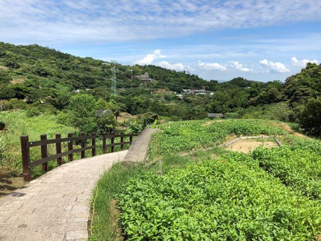 樟樹步道百日草-1.JPG
