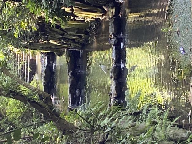 照片6 虎山溪生態豐富