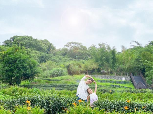 照片6 茶園內零星金針綻放,點綴茶園景觀。