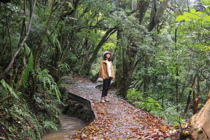 照片4 水圳步道穿梭林間平緩易行。