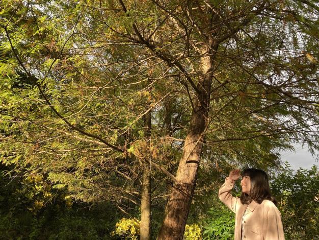 照片5 夕陽餘暉陽光灑落呈現金黃色美景.JPG