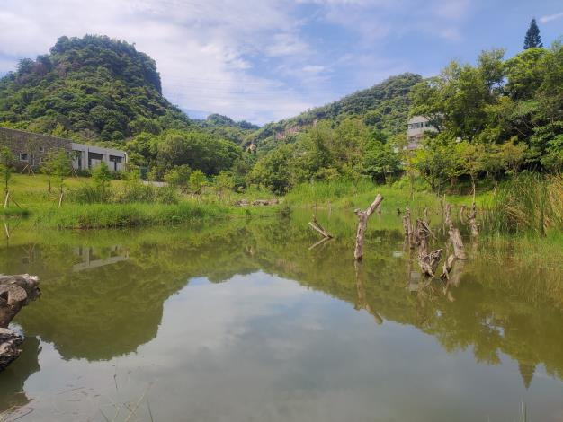 永春陂濕地公園生態已慢慢進駐