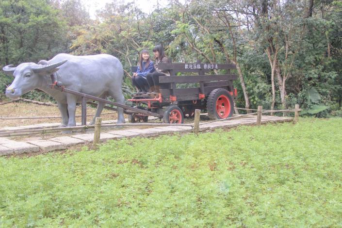 照片7 樟樹步道與牛車意象互動拍照。