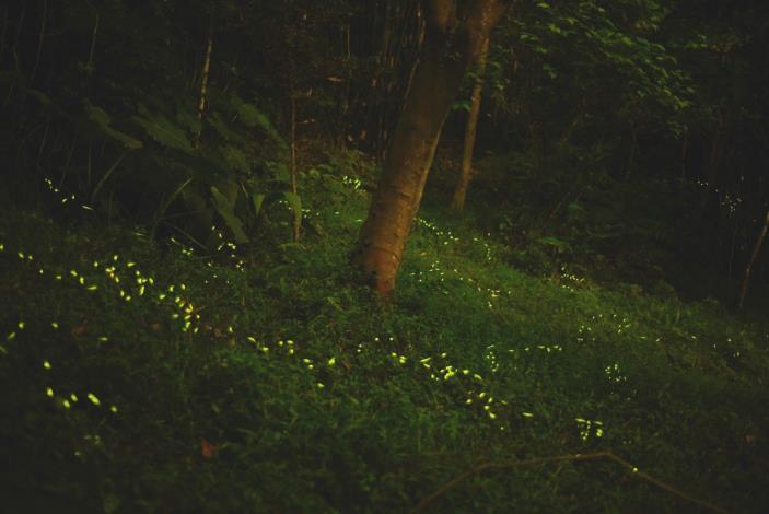 04照片1 虎山螢火蟲(110年4月6日)