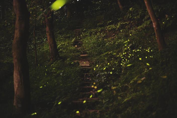 04照片2 虎山螢火蟲(110年4月6日)