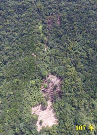 為推動108年起的4年計畫,大地處在107年(左圖)先行小區域疏伐試驗,對比109年(右圖)的結果,裸露地目前綠覆蓋幾乎已達100%。(1)