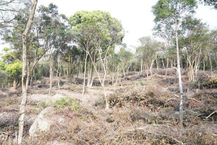 大地處與臺北市立美術館合作針對大崙尾山公有林疏伐,現場將疏伐殘材沿等高線鋪設。.JPG