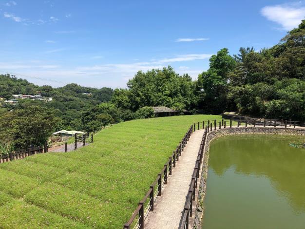 樟樹步道-波斯菊_2.JPG