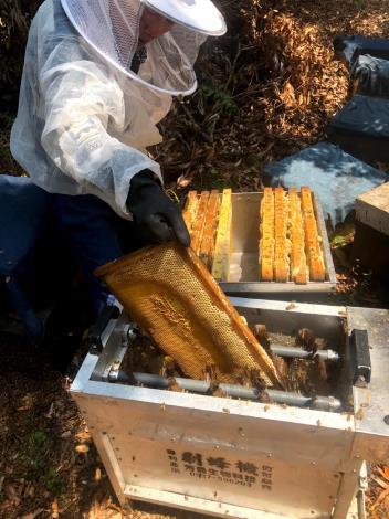 03採蜜前的重要步驟-刷蜂